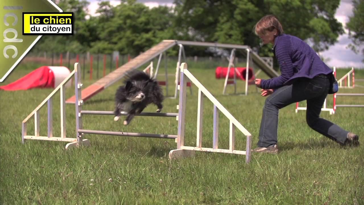 [Comment éduquer son chien en bougeant ? (Partie 2 - Le