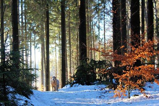 bois, arbre, nature