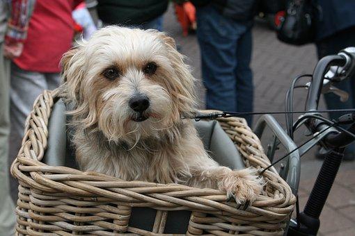 chien, chien dans le panier, mignon