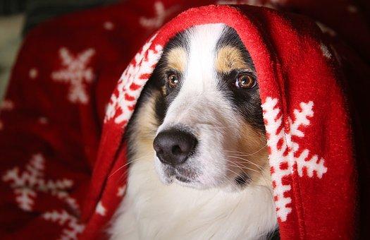 chien, truffe, portrait