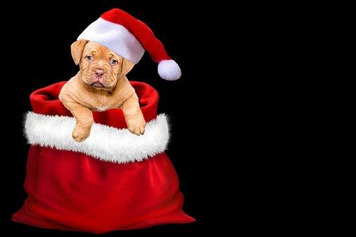 noël, cadeaux, chien