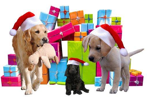 noël, cadeaux, chiens
