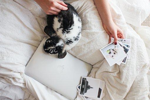ordinateur portable, apple, macbook