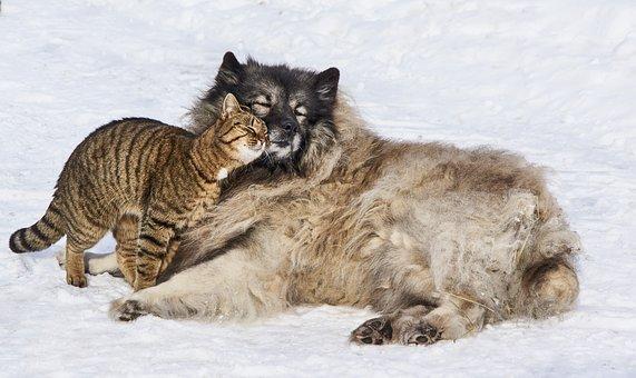 amour, chien, cat