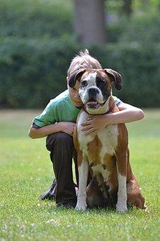 boxer, boxeur allemand, regard de chien