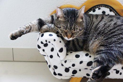 cat, sweet, gueule de bois