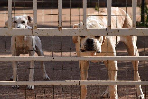 chien, chien de garde, derrière des barrières