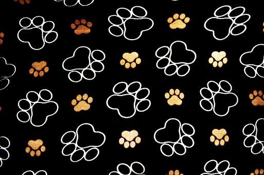 chien, pawprint, pistes