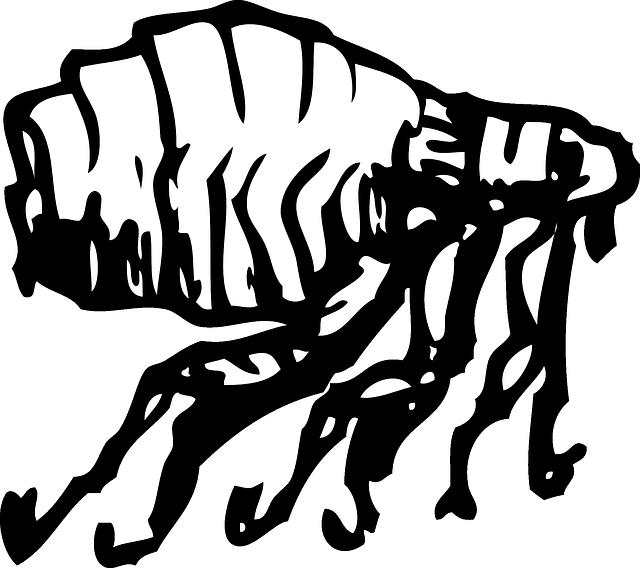 aux puces, scarabée, insecte