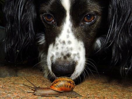 chien, escargot, regarder