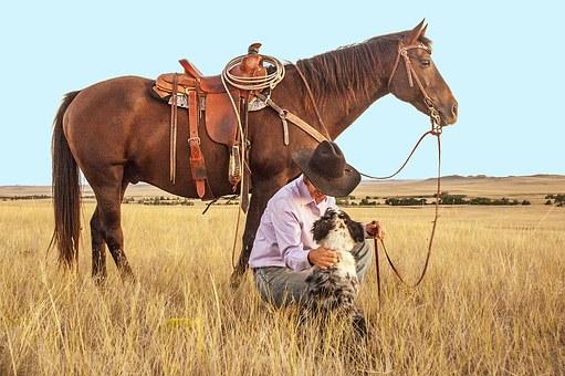 cow boy, cheval, chien