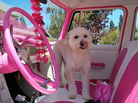 rose, voiture, chien