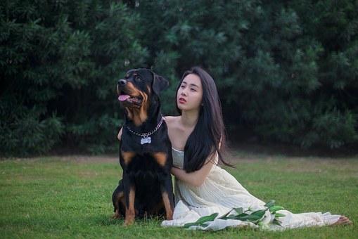 rottweiler, chien, robes de mariée
