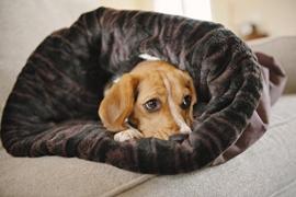 Les 5 meilleurs chien snuggle